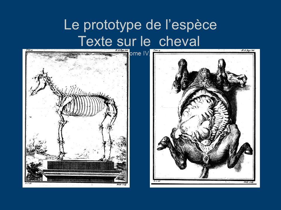 Le prototype de lespèce Texte sur le cheval HN, Tome IV, 1753.