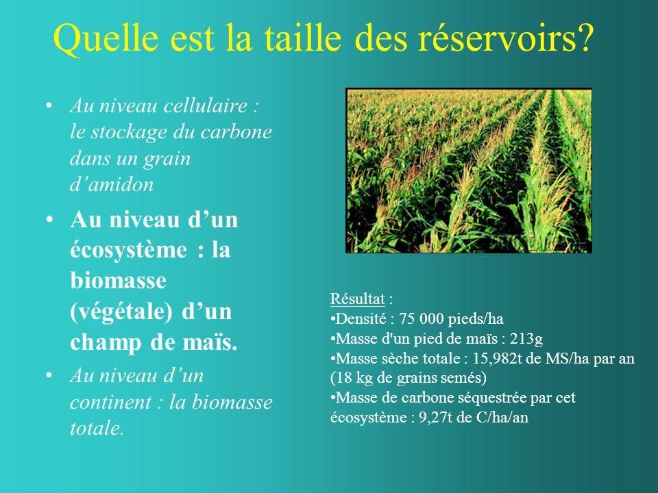 Quelle est la taille des réservoirs? Au niveau cellulaire : le stockage du carbone dans un grain damidon Au niveau dun écosystème : la biomasse (végét