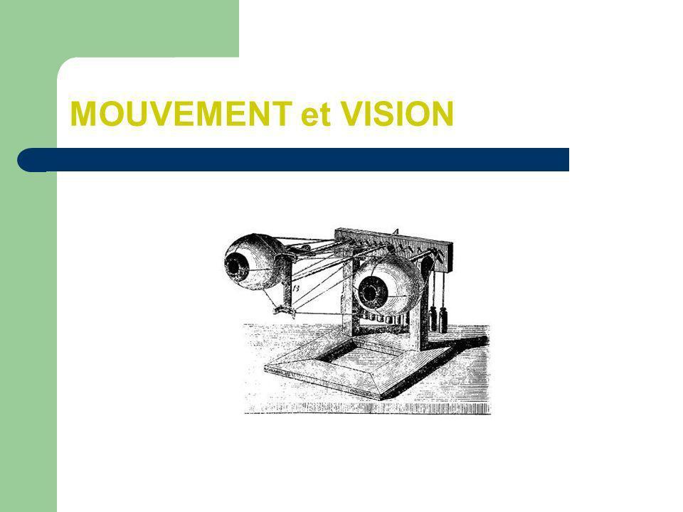 On distingue deux grands types de mouvements oculaires Les mouvements dorientation du regard Ils ont pour objectif de garder la fovéa sur une cible même lorsque celle-ci se déplace Les mouvements de stabilisation du regard Ils ont pour objectif de fixer limage sur la rétine lorsque la tête bouge