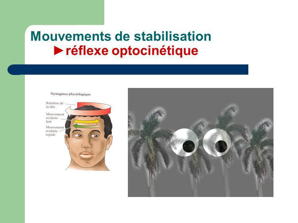 Mouvements de stabilisation réflexe optocinétique