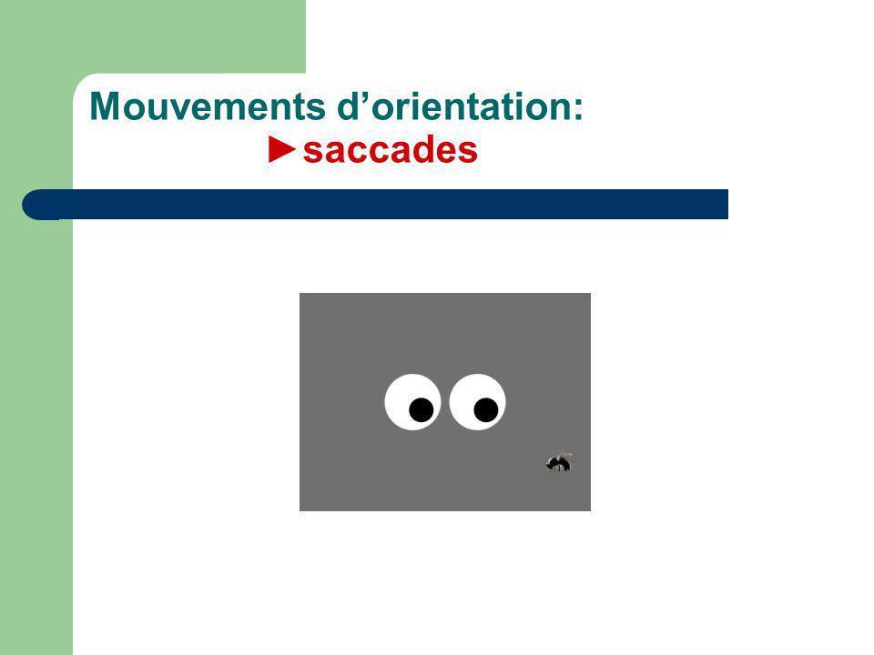 Mouvements dorientation:saccades