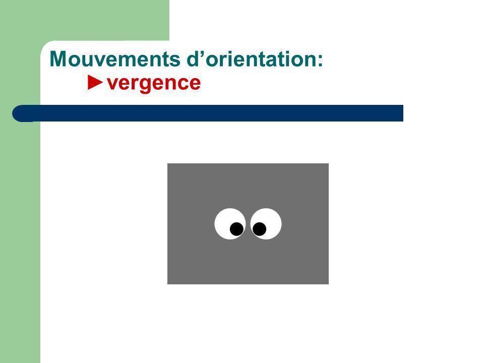 Mouvements dorientation: vergence
