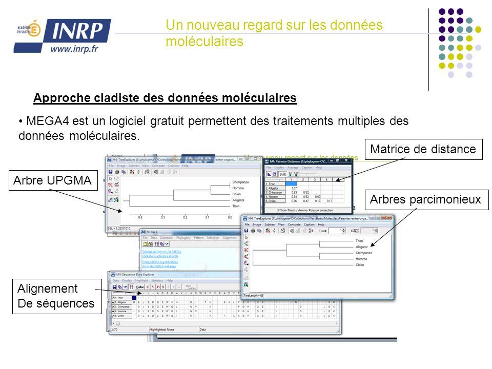 Un nouveau regard sur les données moléculaires Approche cladiste des données moléculaires MEGA4 est un logiciel gratuit permettent des traitements mul