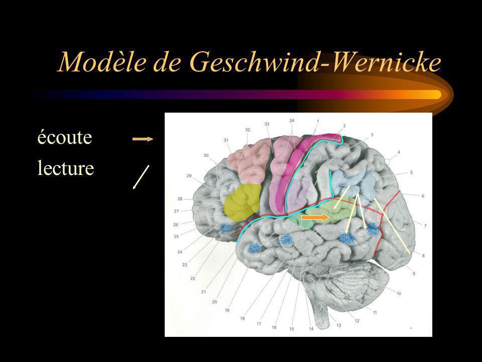 Modèle de Geschwind-Wernicke écoute lecture