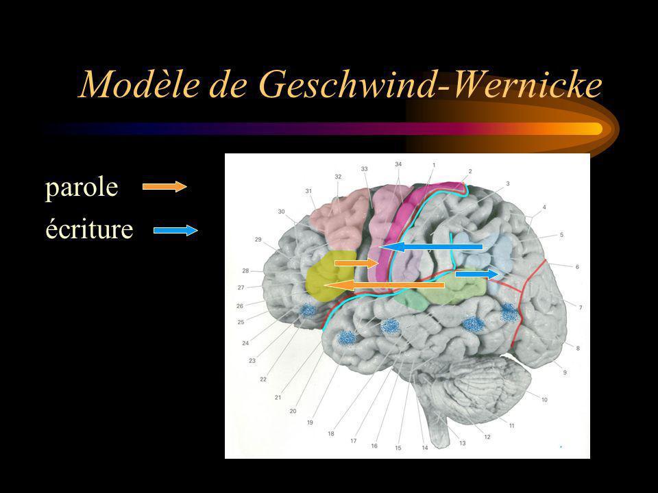 Modèle de Geschwind-Wernicke parole écriture