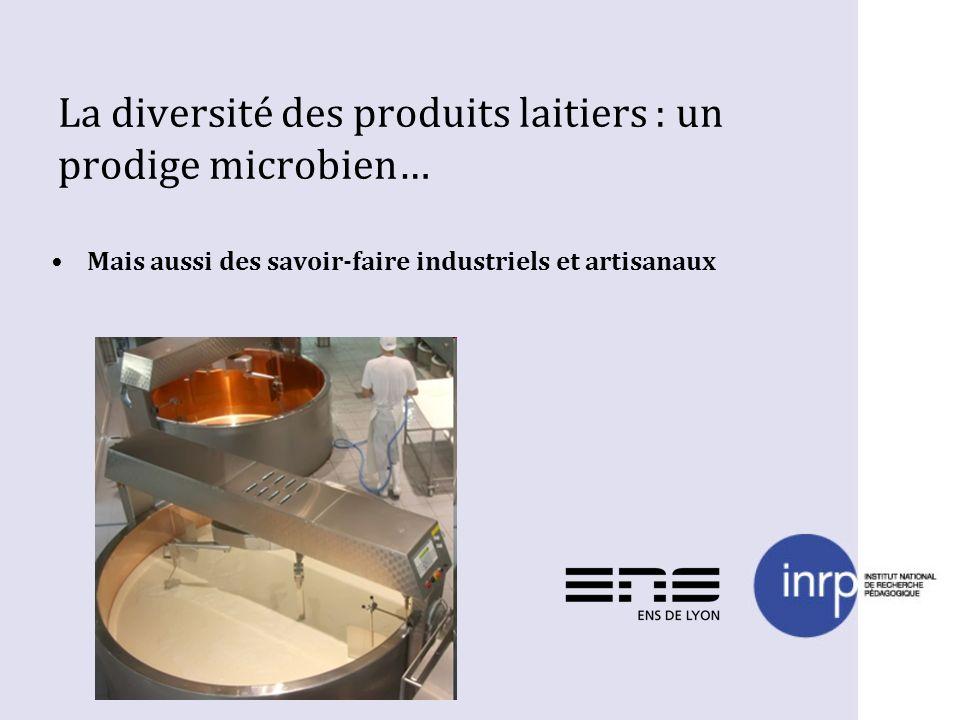 La diversité des produits laitiers : un prodige microbien… Mais aussi des savoir-faire industriels et artisanaux