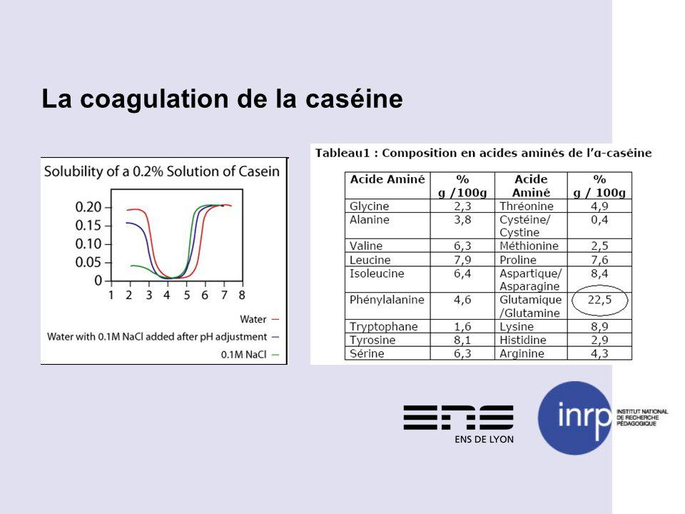 La coagulation de la caséine
