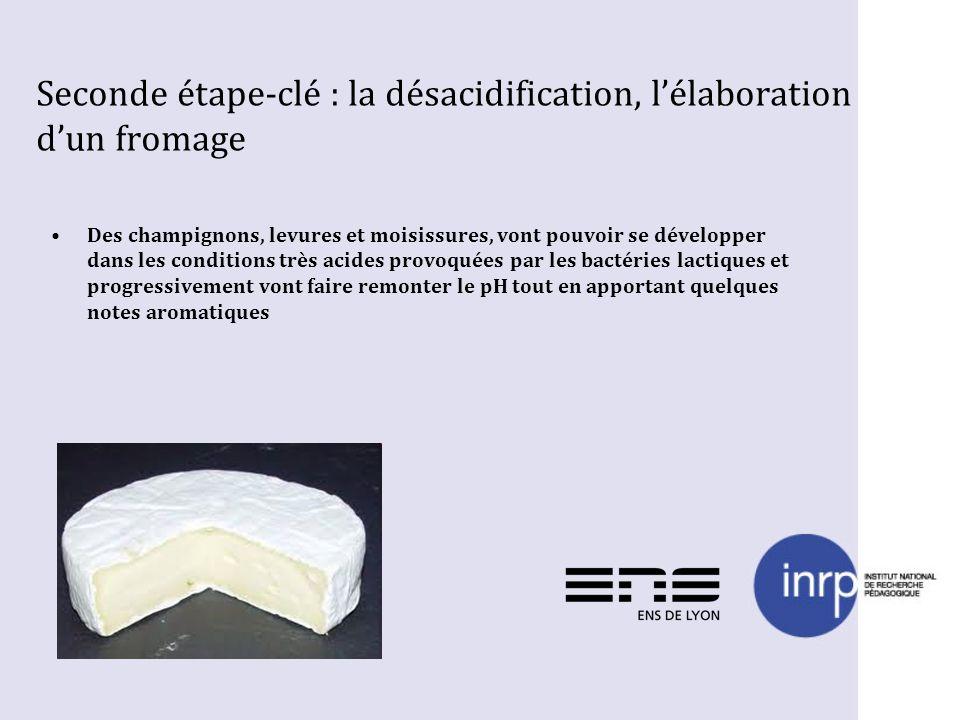 Seconde étape-clé : la désacidification, lélaboration dun fromage Des champignons, levures et moisissures, vont pouvoir se développer dans les conditi