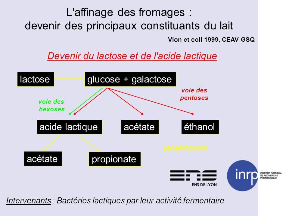 Vion et coll 1999, CEAV GSQ Devenir du lactose et de l'acide lactique lactoseglucose + galactose acide lactiqueacétateéthanol voie des pentoses voie d