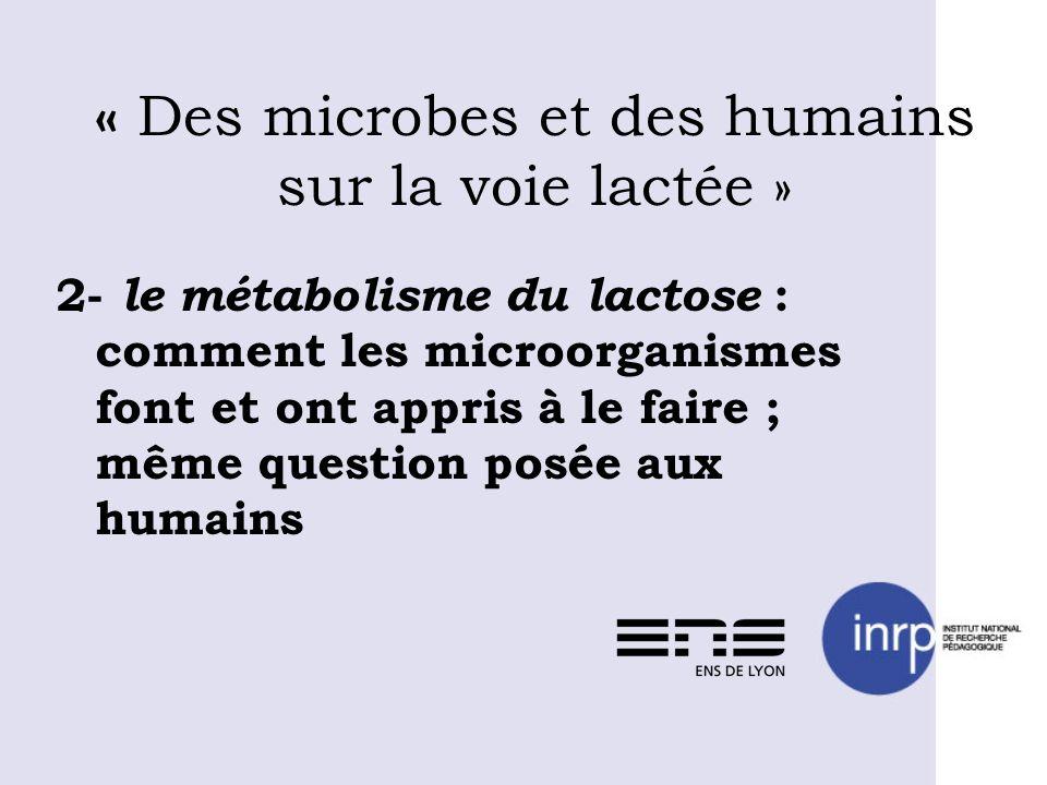 « Des microbes et des humains sur la voie lactée » 2- le métabolisme du lactose : comment les microorganismes font et ont appris à le faire ; même que