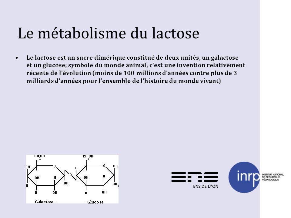 Le métabolisme du lactose Le lactose est un sucre dimérique constitué de deux unités, un galactose et un glucose; symbole du monde animal, cest une in