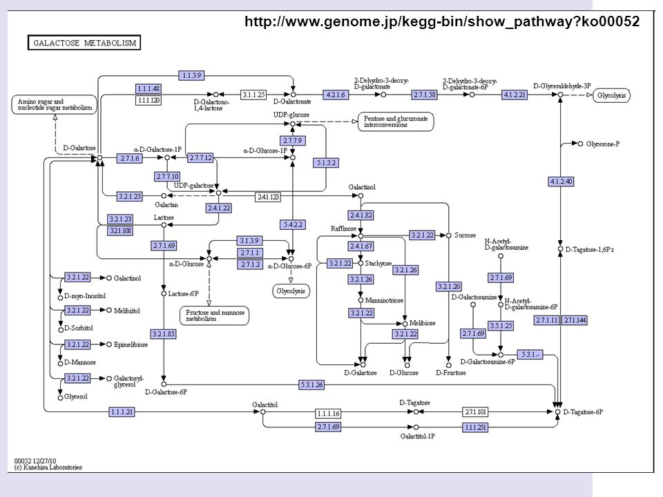 http://www.genome.jp/kegg-bin/show_pathway?ko00052