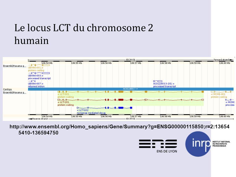 Le locus LCT du chromosome 2 humain http://www.ensembl.org/Homo_sapiens/Gene/Summary?g=ENSG00000115850;r=2:13654 5410-136594750
