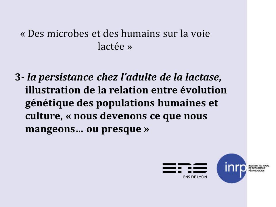 « Des microbes et des humains sur la voie lactée » 3- la persistance chez ladulte de la lactase, illustration de la relation entre évolution génétique