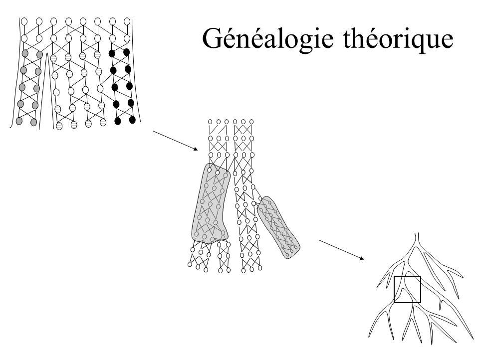 Généalogie théorique