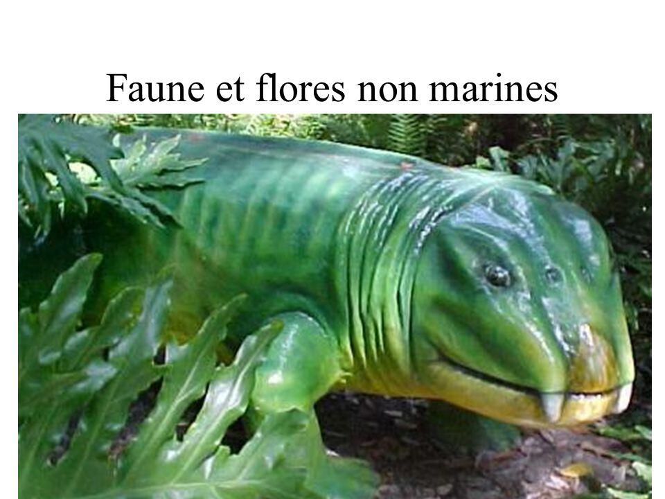 Faune et flores non marines