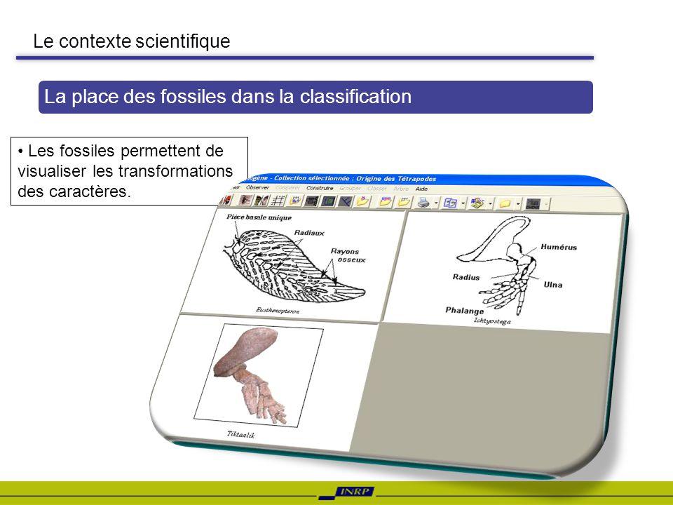 Le contexte scientifique La place des fossiles dans la classification Les fossiles permettent de visualiser les transformations des caractères.