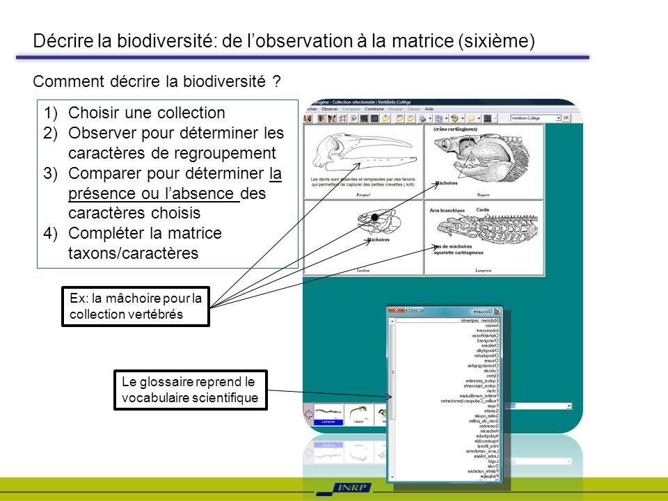 Décrire la biodiversité: de lobservation à la matrice (sixième) 1)Choisir une collection 2)Observer pour déterminer les caractères de regroupement 3)C