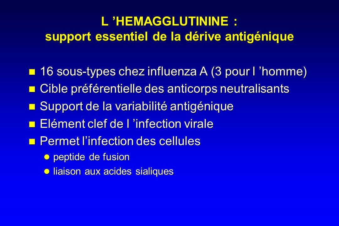 L HEMAGGLUTININE : support essentiel de la dérive antigénique 16 sous-types chez influenza A (3 pour l homme) Cible préférentielle des anticorps neutralisants Support de la variabilité antigénique Elément clef de l infection virale Permet linfection des cellules peptide de fusion liaison aux acides sialiques 16 sous-types chez influenza A (3 pour l homme) Cible préférentielle des anticorps neutralisants Support de la variabilité antigénique Elément clef de l infection virale Permet linfection des cellules peptide de fusion liaison aux acides sialiques