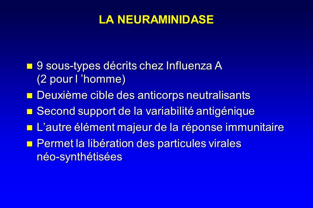 LA NEURAMINIDASE 9 sous-types décrits chez Influenza A (2 pour l homme) Deuxième cible des anticorps neutralisants Second support de la variabilité antigénique Lautre élément majeur de la réponse immunitaire Permet la libération des particules virales néo-synthétisées 9 sous-types décrits chez Influenza A (2 pour l homme) Deuxième cible des anticorps neutralisants Second support de la variabilité antigénique Lautre élément majeur de la réponse immunitaire Permet la libération des particules virales néo-synthétisées
