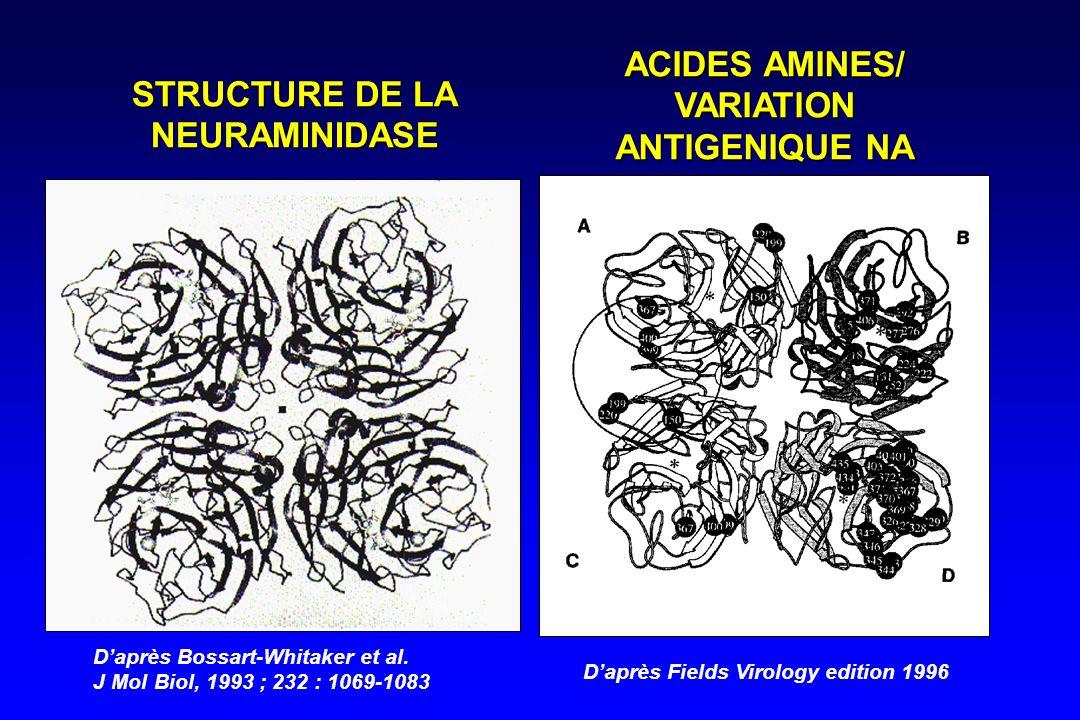 Daprès Bossart-Whitaker et al. J Mol Biol, 1993 ; 232 : 1069-1083 STRUCTURE DE LA NEURAMINIDASE ACIDES AMINES/ VARIATION ANTIGENIQUE NA Daprès Fields