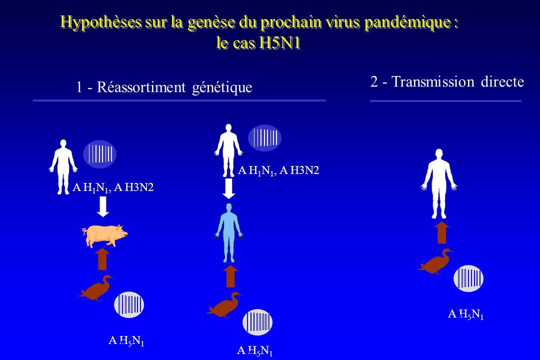Hypothèses sur la genèse du prochain virus pandémique : le cas H5N1 Hypothèses sur la genèse du prochain virus pandémique : le cas H5N1 A H 1 N 1, A H3N2 A H 5 N 1 1 - Réassortiment génétique 2 - Transmission directe A H 5 N 1