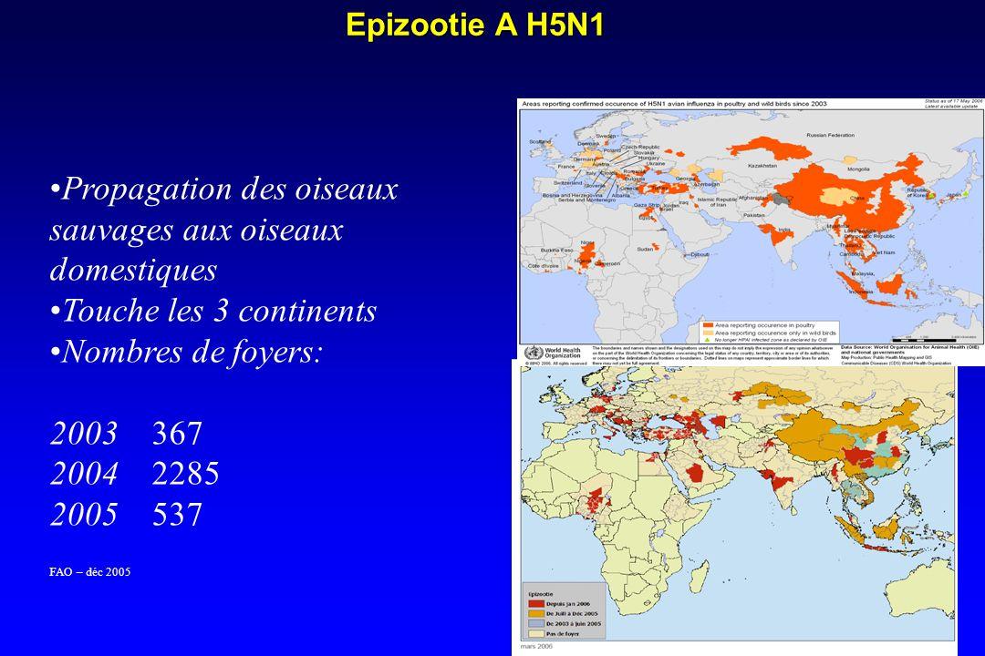 Epizootie A H5N1 Propagation des oiseaux sauvages aux oiseaux domestiques Touche les 3 continents Nombres de foyers: 2003 367 2004 2285 2005 537 FAO – déc 2005 Source – INVS