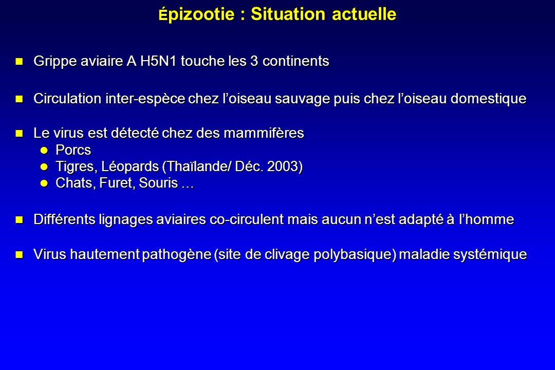 É pizootie : Situation actuelle Grippe aviaire A H5N1 touche les 3 continents Circulation inter-espèce chez loiseau sauvage puis chez loiseau domestique Le virus est détecté chez des mammifères Porcs Tigres, Léopards (Thaïlande/ Déc.