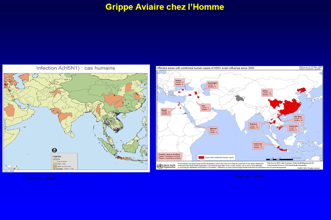 Grippe Aviaire chez lHomme Source – INVS Source – WHO
