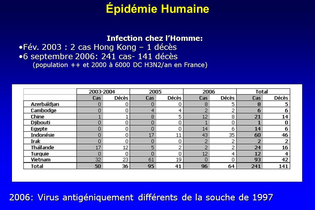 Épidémie Humaine Infection chez lHomme: Fév. 2003 : 2 cas Hong Kong – 1 décèsFév. 2003 : 2 cas Hong Kong – 1 décès 6 septembre 2006: 241 cas- 141 décè