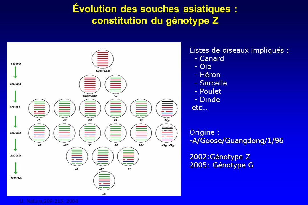 Évolution des souches asiatiques : constitution du génotype Z Listes de oiseaux impliqués : - Canard - Oie - Héron - Sarcelle - Poulet - Dinde etc… Origine :-A/Goose/Guangdong/1/96 2002:Génotype Z 2005: Génotype G Li.