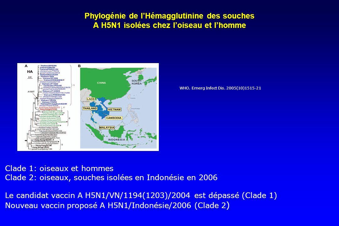 Phylogénie de lHémagglutinine des souches A H5N1 isolées chez loiseau et lhomme WHO. Emerg Infect Dis. 2005(10)1515-21 Clade 1: oiseaux et hommes Clad
