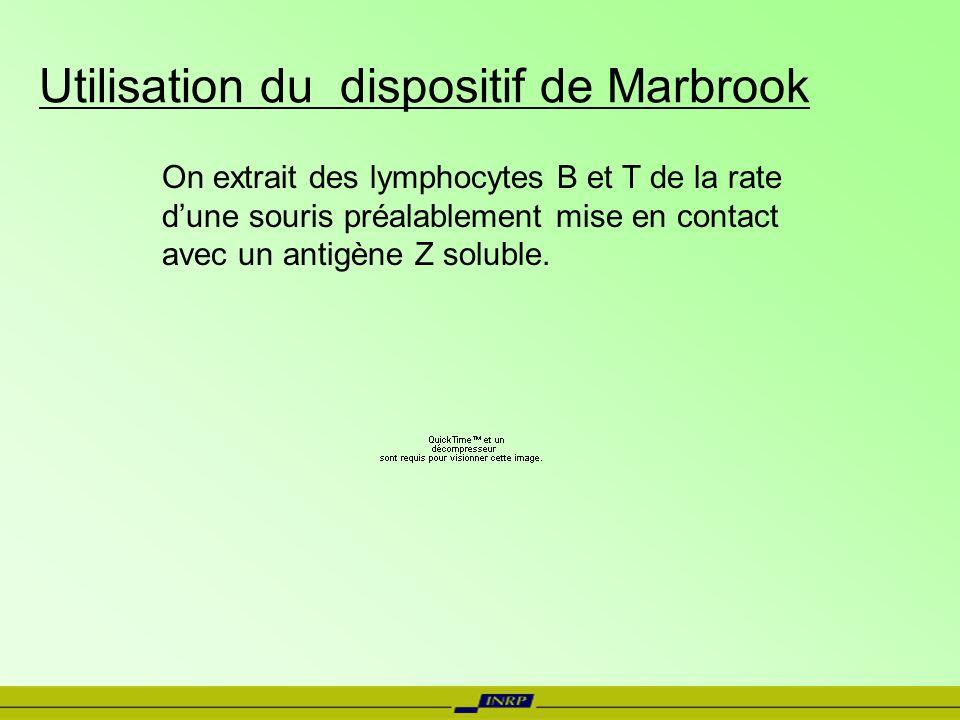 Utilisation du dispositif de Marbrook On extrait des lymphocytes B et T de la rate dune souris préalablement mise en contact avec un antigène Z solubl