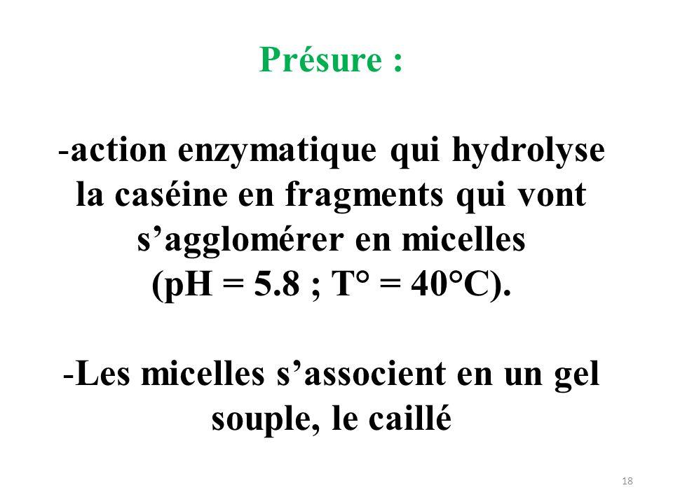 Présure : -action enzymatique qui hydrolyse la caséine en fragments qui vont sagglomérer en micelles (pH = 5.8 ; T° = 40°C). -Les micelles sassocient