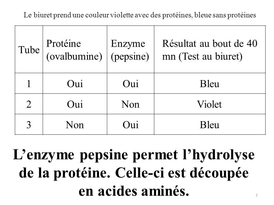 Tube Protéine (ovalbumine) Enzyme (pepsine) Résultat au bout de 40 mn (Test au biuret) 1Oui Bleu 2OuiNonViolet 3NonOuiBleu Le biuret prend une couleur