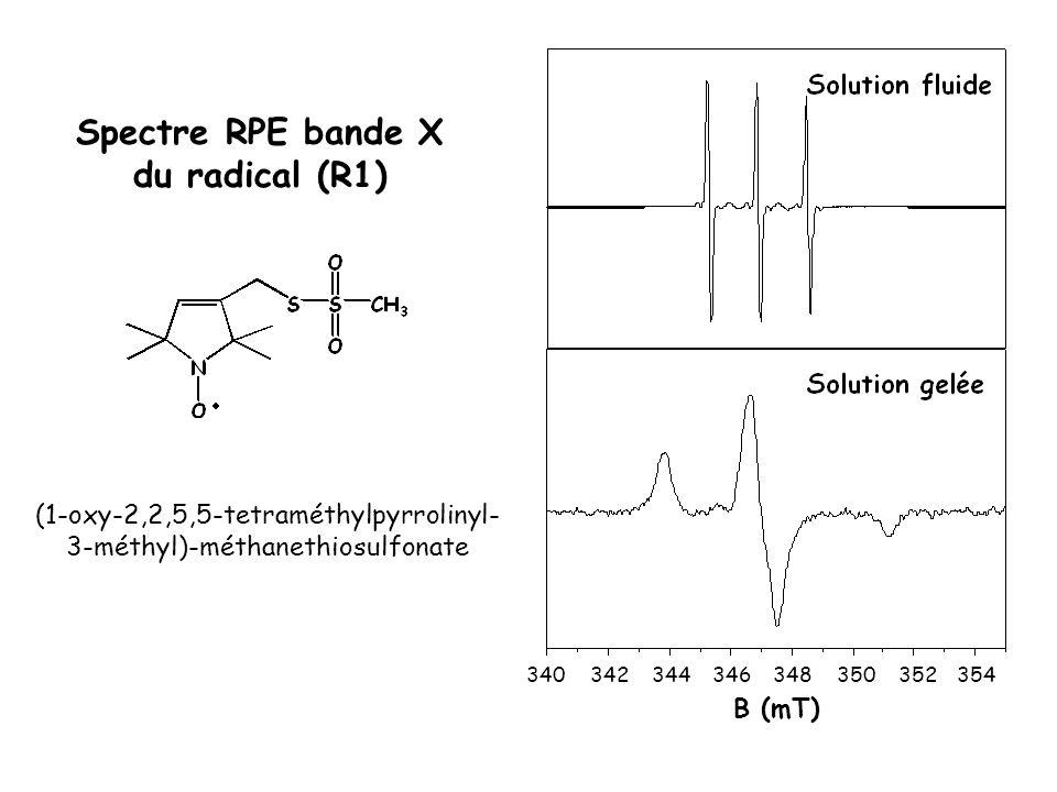 340342344346348350352354 B (mT) Spectre RPE bande X du radical (R1) (1-oxy-2,2,5,5-tetraméthylpyrrolinyl- 3-méthyl)-méthanethiosulfonate