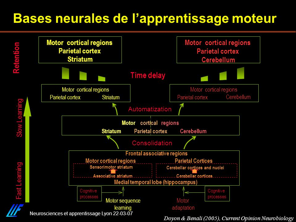 Neurosciences et apprentissage Lyon 22-03-07 Retention Cerebellum Motor cortical regions Striatum Parietal cortex Fast Learning Slow Learning Time del
