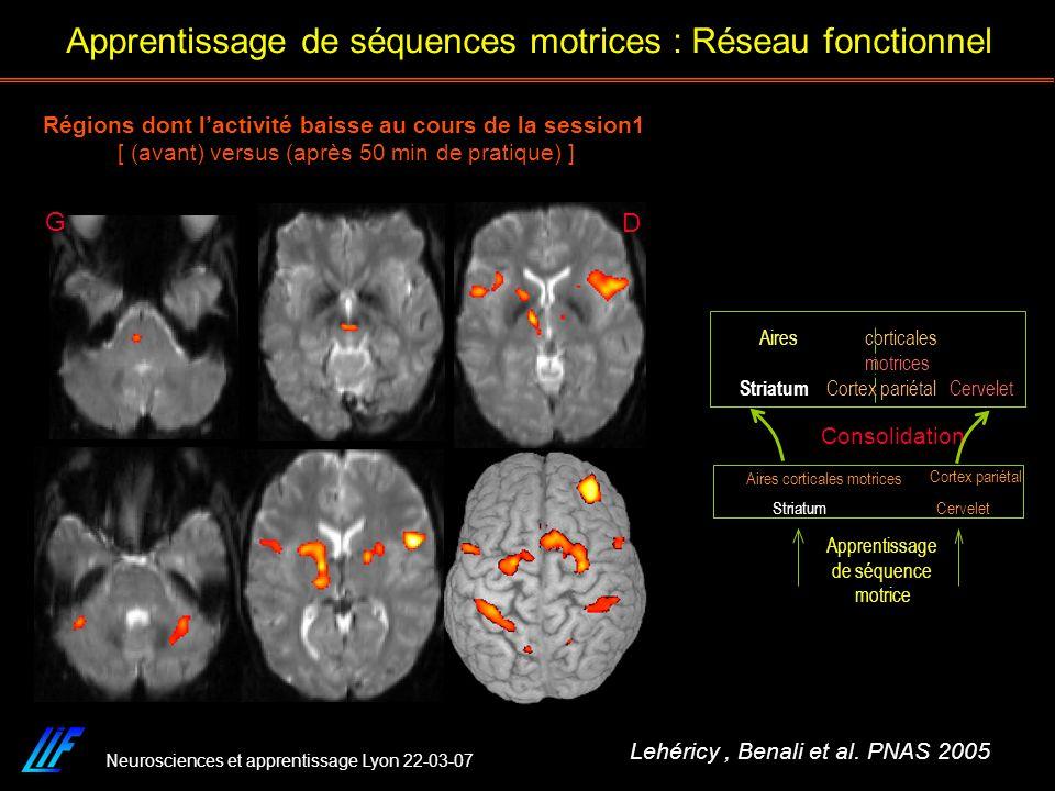 Neurosciences et apprentissage Lyon 22-03-07 Régions dont lactivité baisse au cours de la session1 [ (avant) versus (après 50 min de pratique) ] D G L