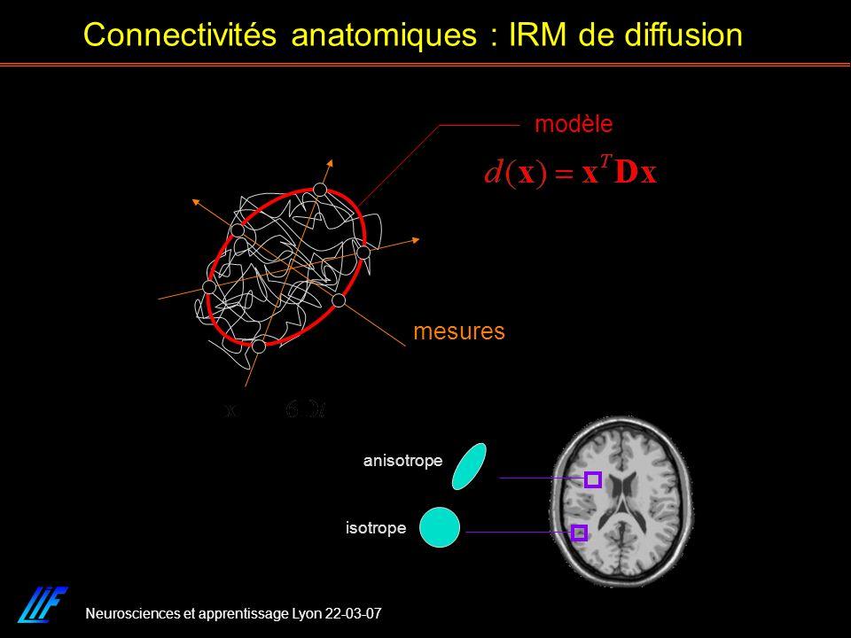 Neurosciences et apprentissage Lyon 22-03-07 Connectivités anatomiques : IRM de diffusion isotrope anisotrope mesures modèle
