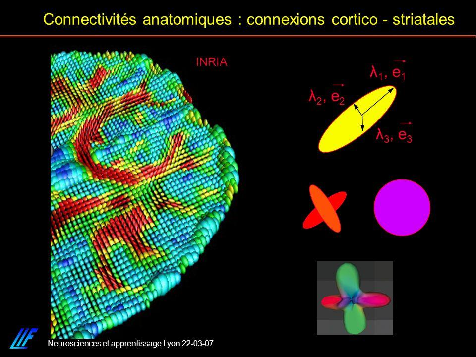 Neurosciences et apprentissage Lyon 22-03-07 Connectivités anatomiques : connexions cortico - striatales INRIA λ 1, e 1 λ 3, e 3 λ 2, e 2