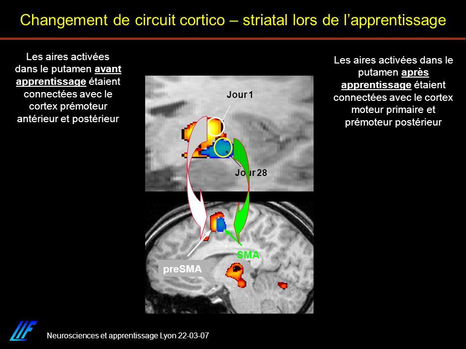 Neurosciences et apprentissage Lyon 22-03-07 preSMA SMA Jour 1 Jour 28 Les aires activées dans le putamen après apprentissage étaient connectées avec