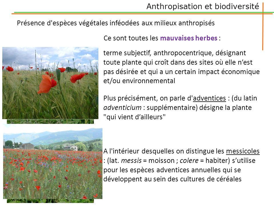 Présence d'espèces végétales inféodées aux milieux anthropisés Ce sont toutes les mauvaises herbes : terme subjectif, anthropocentrique, désignant tou