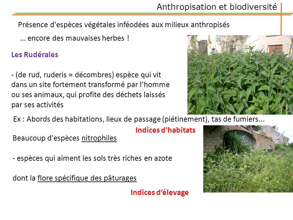 Les Rudérales - (de rud, ruderis = décombres) espèce qui vit dans un site fortement transformé par lhomme ou ses animaux, qui profite des déchets lais