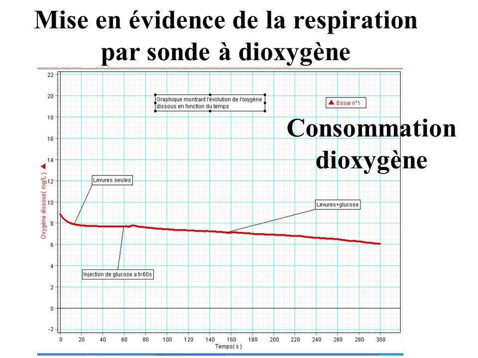 Mise en évidence de la respiration par sonde à dioxygène Consommation dioxygène