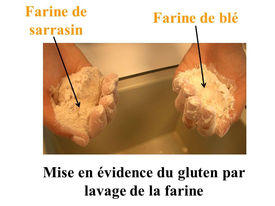 Farine de blé Farine de sarrasin Mise en évidence du gluten par lavage de la farine