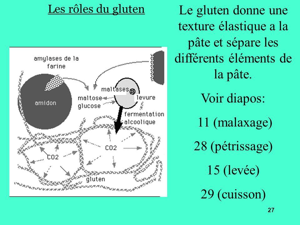 Les rôles du gluten Le gluten donne une texture élastique a la pâte et sépare les différents éléments de la pâte. Voir diapos: 11 (malaxage) 28 (pétri