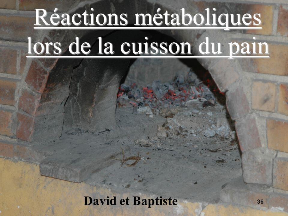 36 Réactions métaboliques lors de la cuisson du pain David et Baptiste