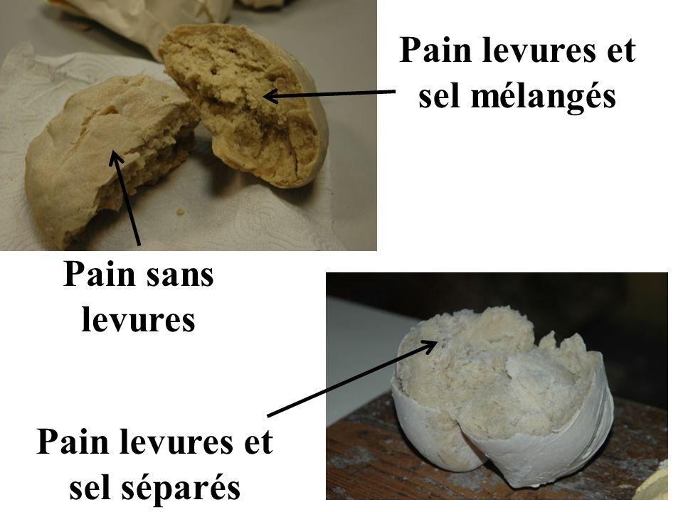 Pain levures et sel mélangés Pain levures et sel séparés Pain sans levures