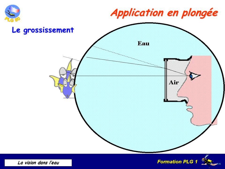 Formation PLG 1 La vision dans leau Application en plongée Le grossissement
