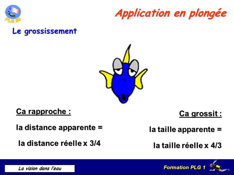 Formation PLG 1 La vision dans leau Ca rapproche : la distance apparente = la distance réelle x 3/4 la distance réelle x 3/4 Ca grossit : la taille ap
